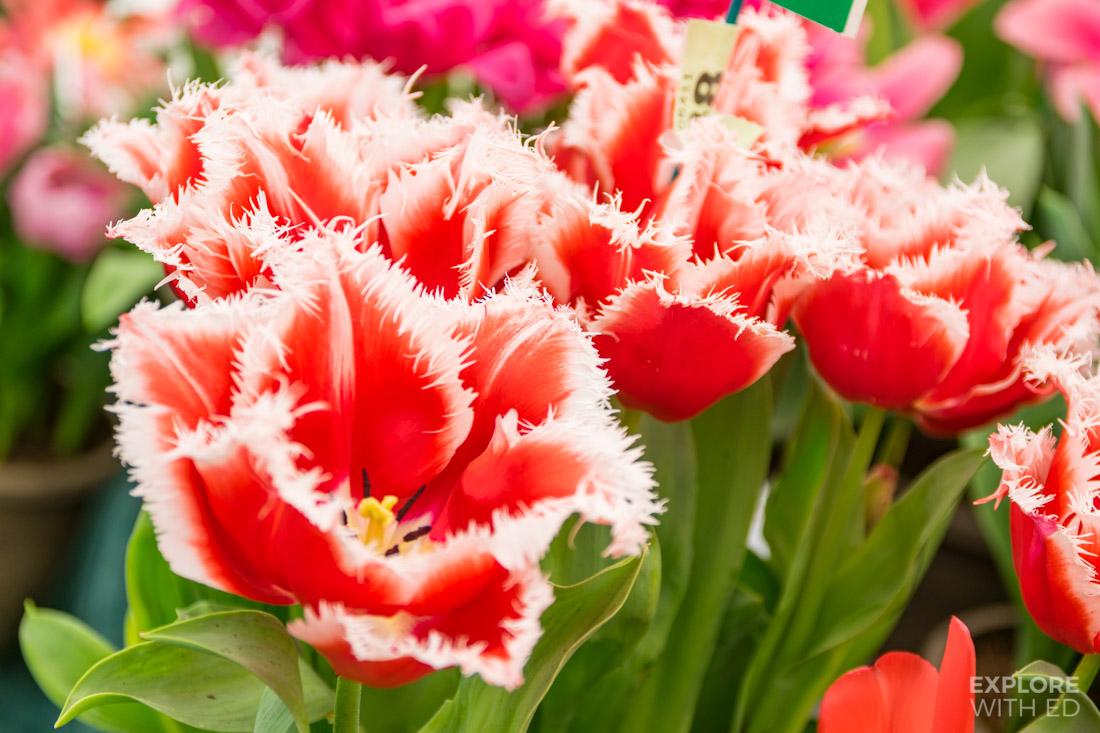 RHS Flower Show in Cardiff