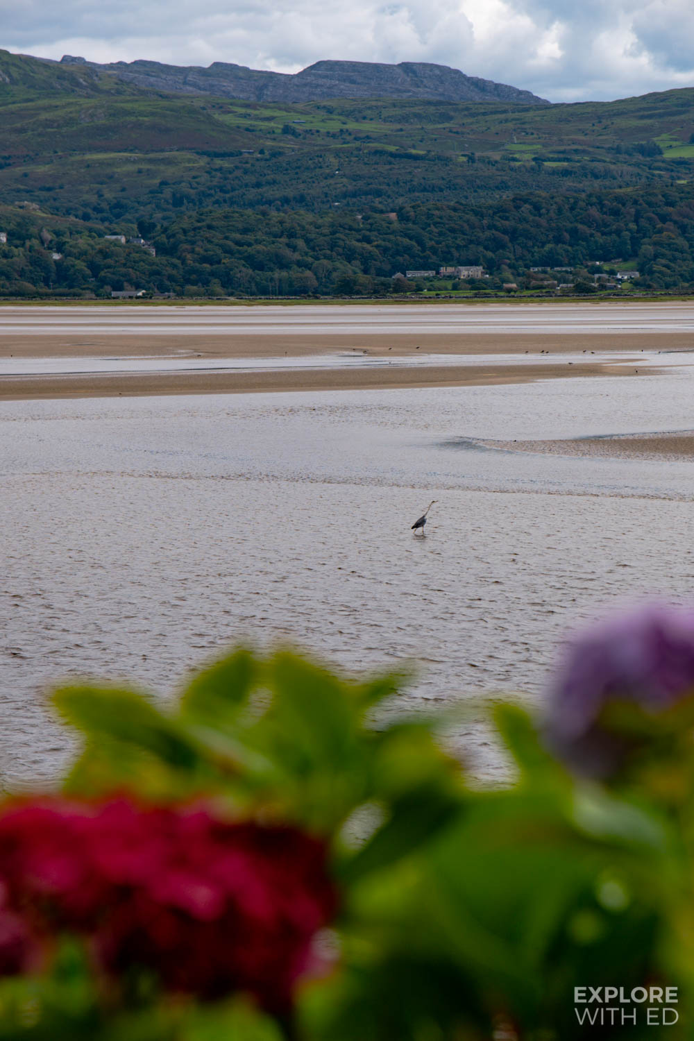 Portmeirion Estuary and wildlife